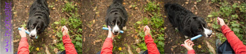 bugbuster, hundeschule muenchen, rettungshundeausbildung, bringselverweis, australian shepherd, apport